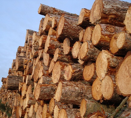 Amazônia comemora menor desmatamento