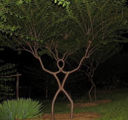 Móveis que 'crescem' no jardim
